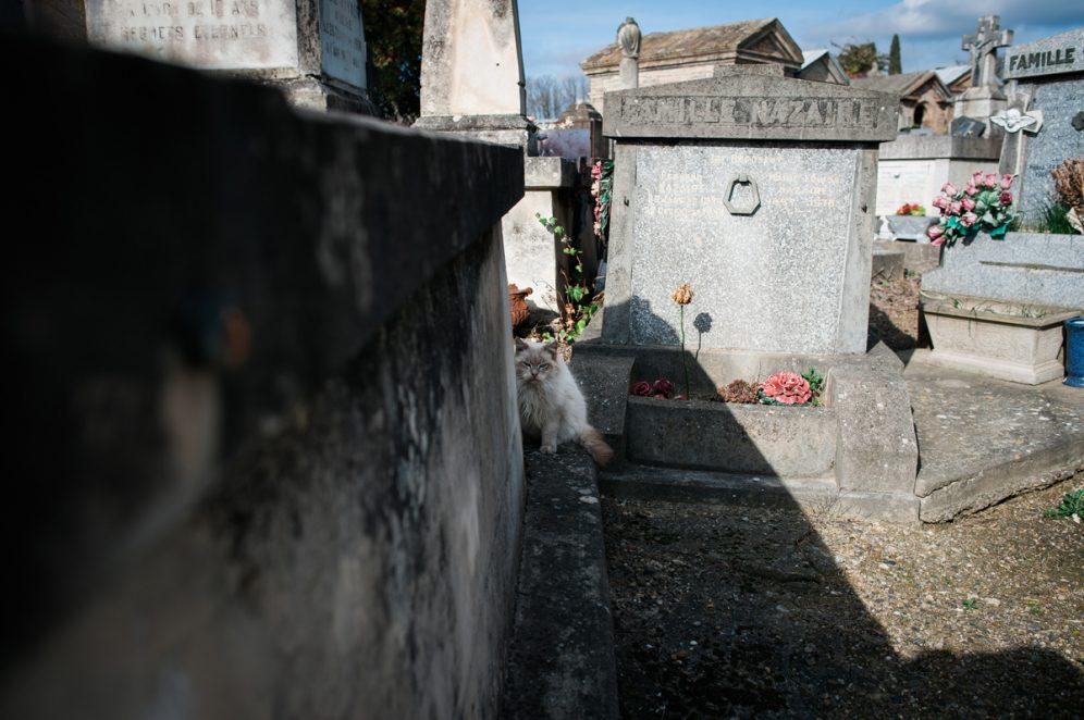 Chat caché Cimetière Toulouse Terre Cabade