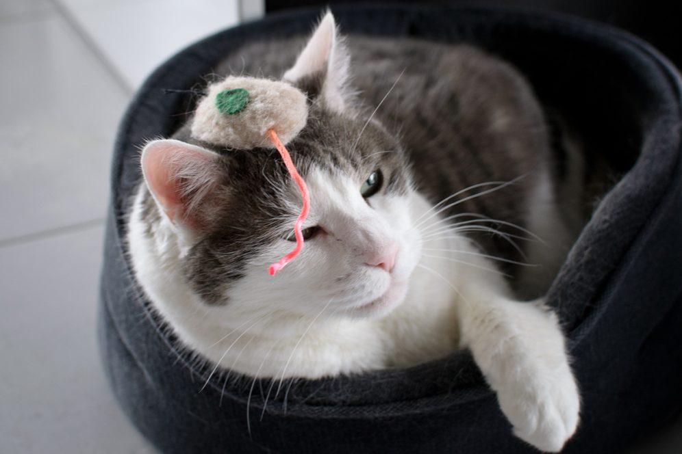 Saleme le chat