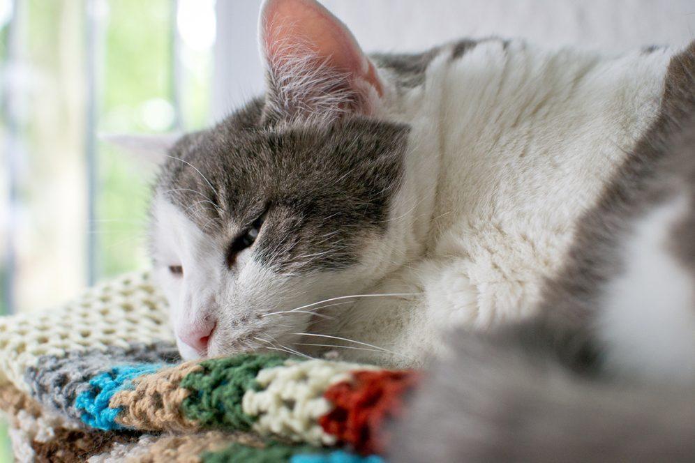 Saleme le chat sur la couverture