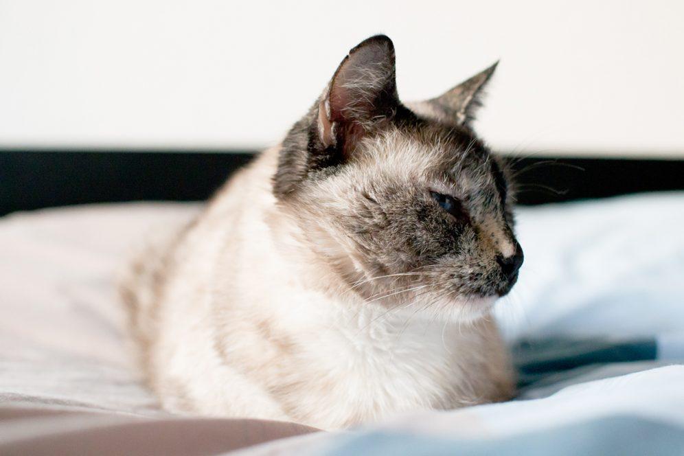 Linette le chat sur le lit